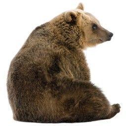 KEK Amsterdam Forest Friends Bear XL muursticker