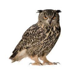 KEK Amsterdam Forest Friend Owl muursticker