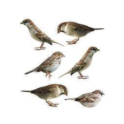 KEK Amsterdam Forest Friends Sparrows muursticker 6 stuks