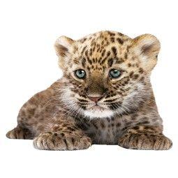 KEK Amsterdam Safari Friends Leopard Cub XL muursticker
