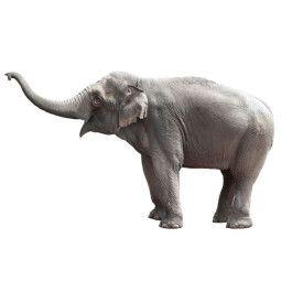 KEK Amsterdam Safari Friends Elephant XL muursticker